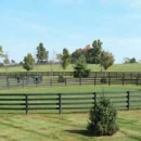 Oak Fencing Enclosure For Horses