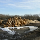 A Pile Of Logs Used For Shoring