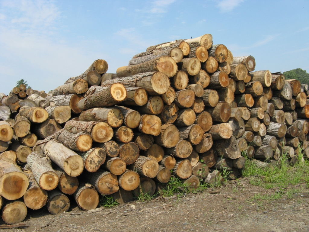 Tree Length Hardwood Logs